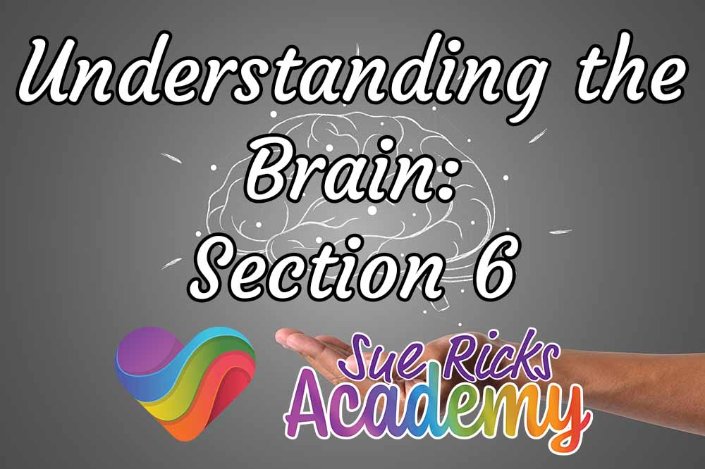 Understanding the Brain - Section 6